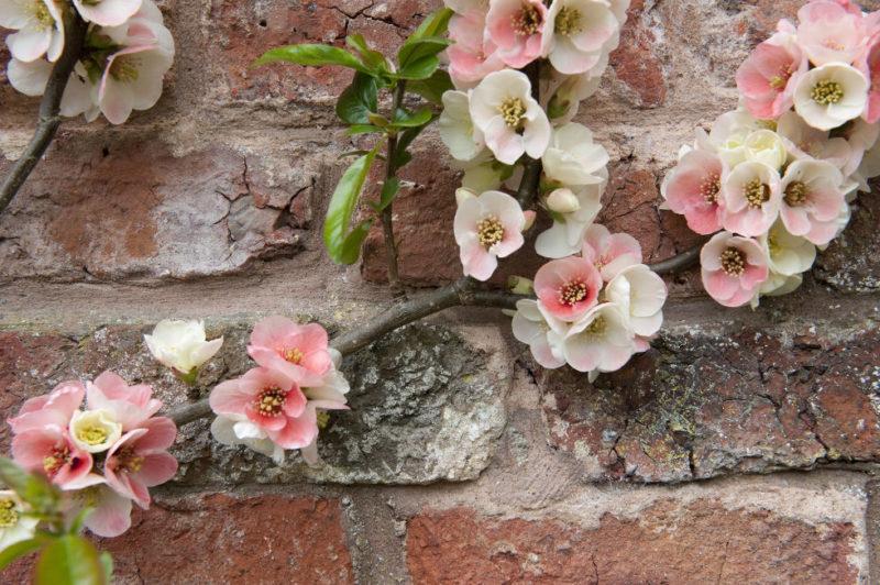 blossom-wall